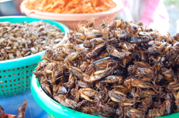 fried insects photo