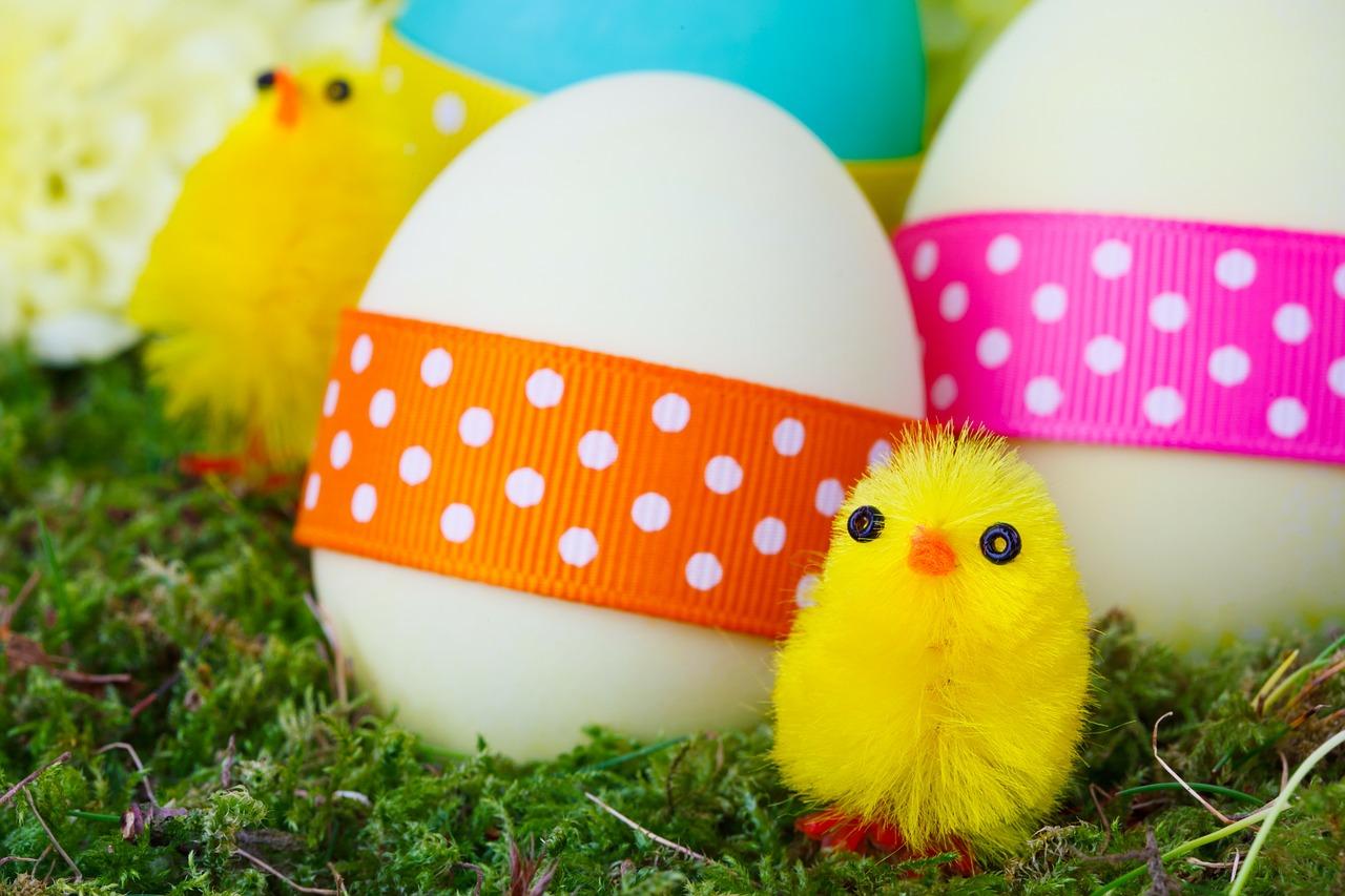 Trivia Quiz- Welk kuikentje wordt een kip?