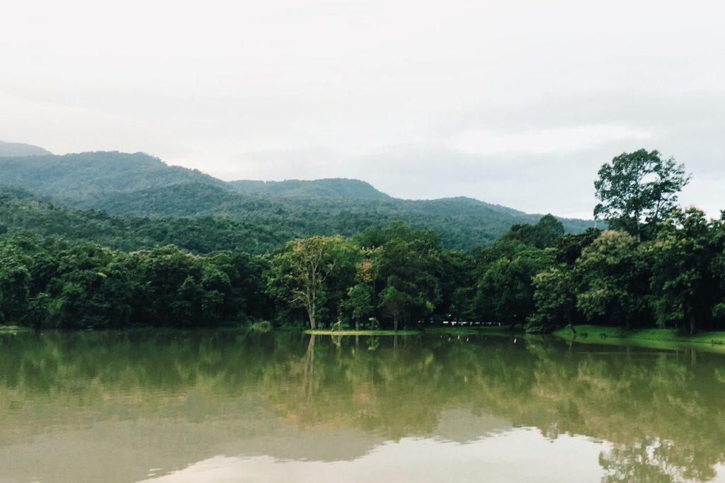 foto van een tropisch regenwoud